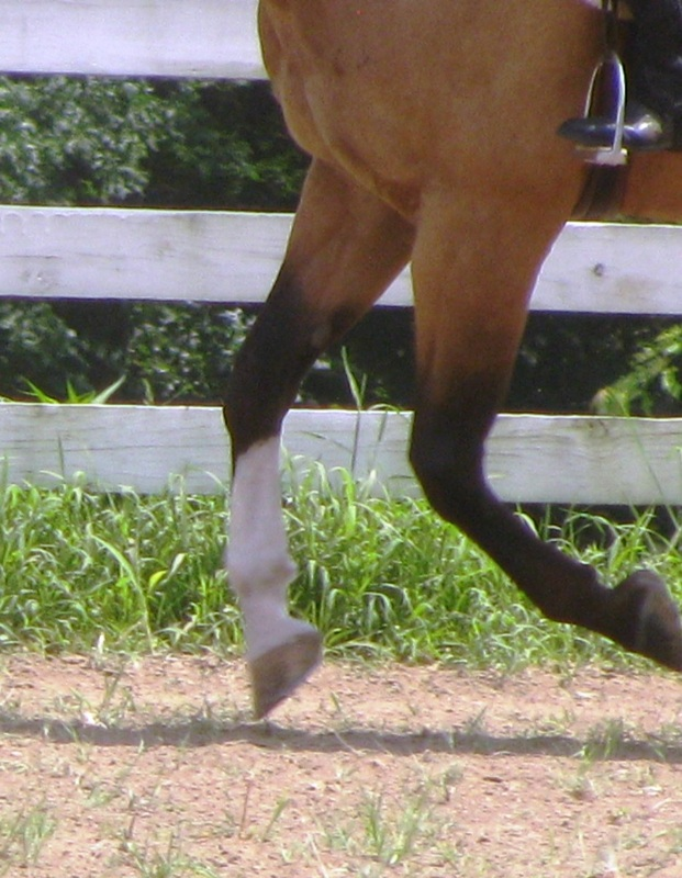 how to become a horse instructor